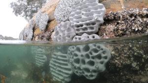 Betonelemente aus dem 3D-Drucker sollen neue Lebensräume für Meeresorganismen bieten.