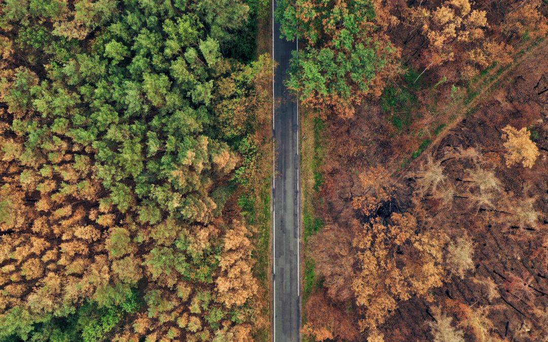 Klimawandel im Wald: Neue Bäume braucht das Land