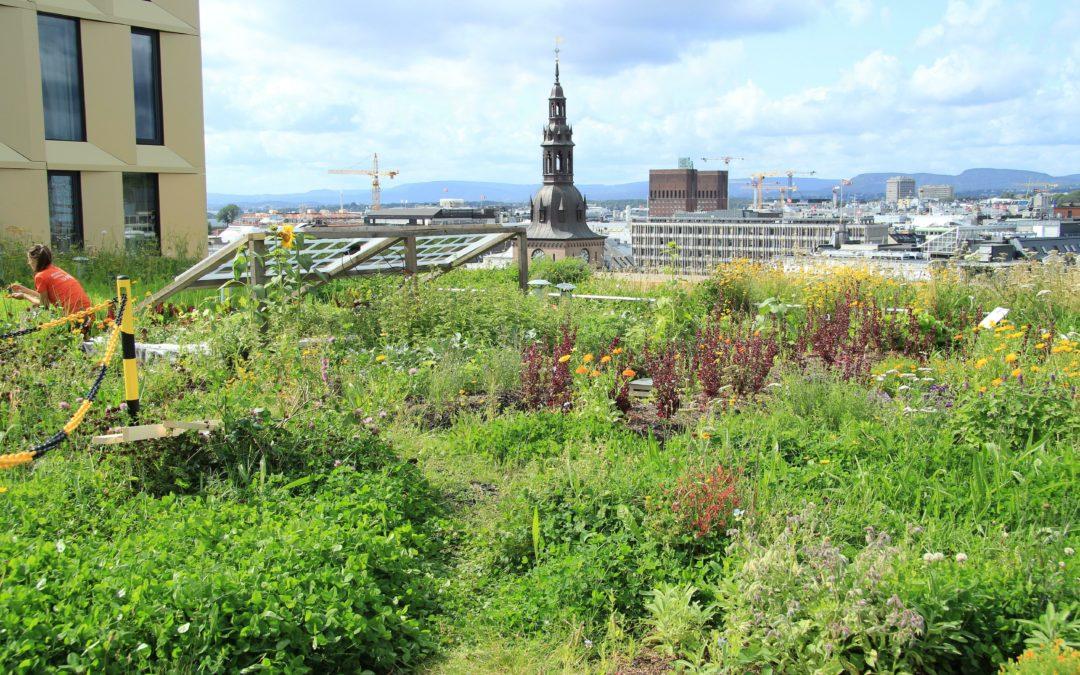 Grüne Hauptstadt Europas: Oslo lebt den Klimaschutz vor