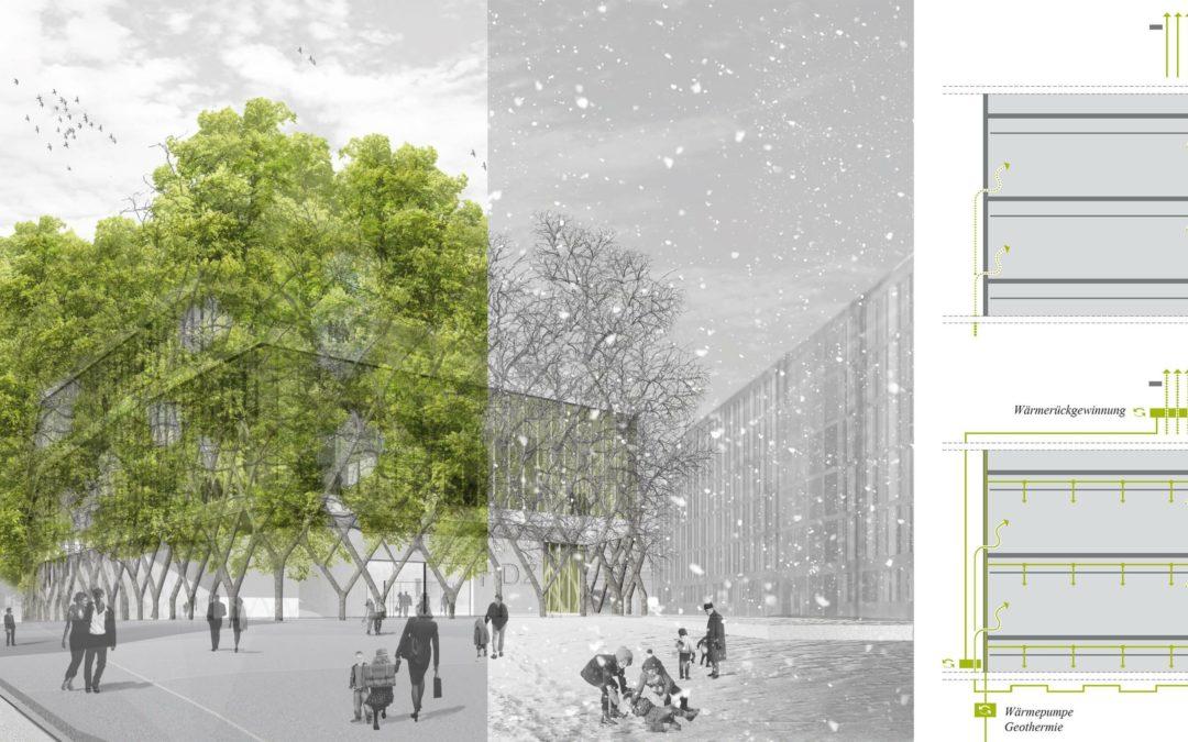 Baubotanik: Hybrid-Häuser aus Bäumen