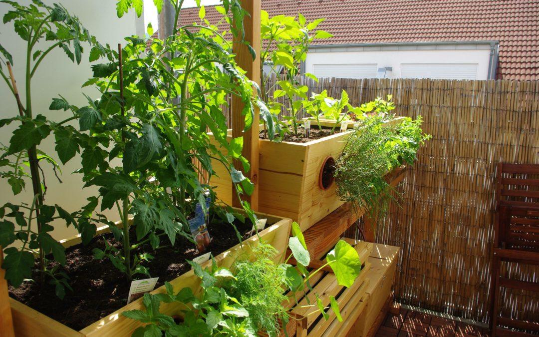 Einfacher Balkon-Garten dank Würmern