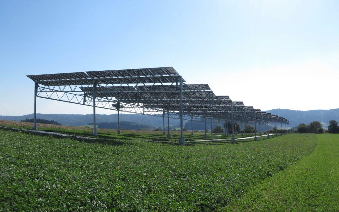 Wenn Kartoffeln unter Solarpanels wachsen