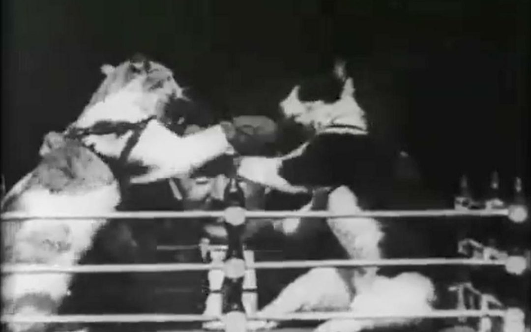 Wie Thomas Edison das Katzenvideo erfand