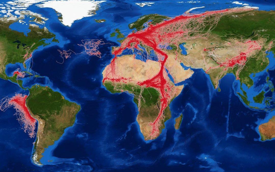 ISS: Dem Vogelzug aus dem Weltraum auf der Spur